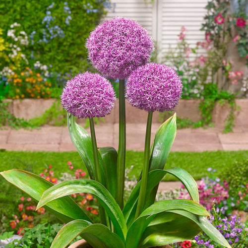 Bulbi Allium Party Balloons