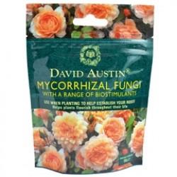 Ingrasaminte Mycorrhizal Fungi Complex de inradacinare