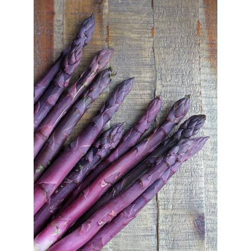 Plante Asparagus officinalis Pacific Purple - Sparanghel de consum cu lastari purpurii