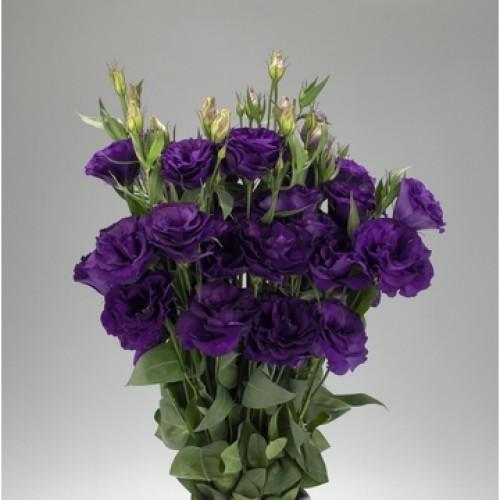 Seminte LISIANTHUS (Eustoma grandiflorum) ADVANTAGE F1 2-3 Purple