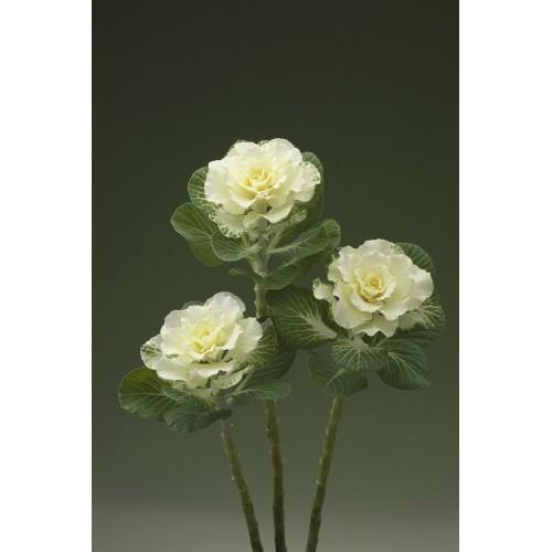 Seminte BRASSICA oleracea CRANE F1Flare White - Varza decorativa