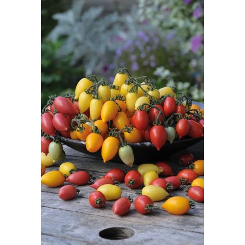 Seminte z SOLANUM tomato Funnyplums Mix Full