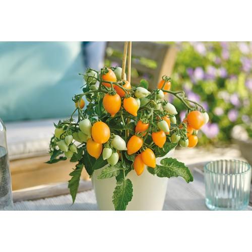 Seminte z SOLANUM tomato Funnyplums Orange