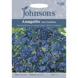 Seminte ANAGALLIS monelli Blue Pimpernel - Scanteiuta