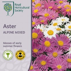 Seminte ASTER alpinus Alpine Mixed-Stelute