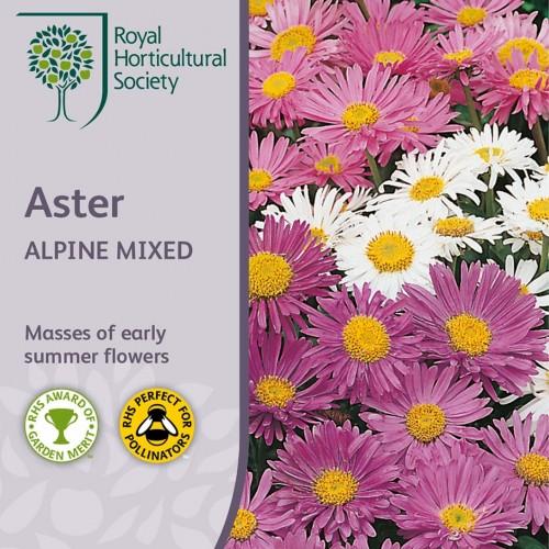 Seminte ASTER alpinus Alpine Mixed-Stelute