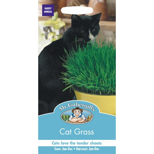 Seminte AVENA sativa Cat Grass - Iarba pisicii