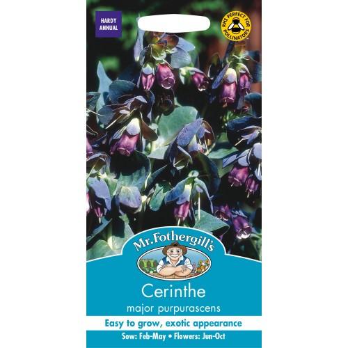 Seminte CERINTHE major purpurescens - Coroana Gibraltarului