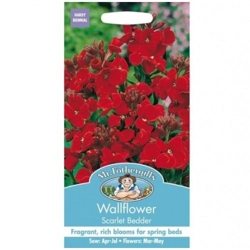 Seminte CHEIRANTHUS cheiri-Wallflower-Scarlet Bedder-Micsunele