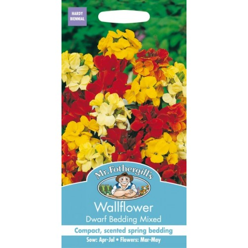 Seminte CHEIRANTHUS cheiri-Wallflower-Dwarf Bedding Mix-Micsunele