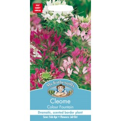 Seminte CLEOME spinosa Colour Fountain - Cleome Floare Paianjen