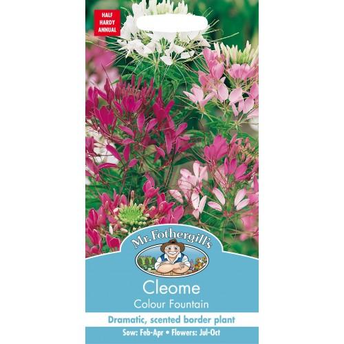 Seminte CLEOME spinosa Colour Fountain - Cleome Floare Paianjen