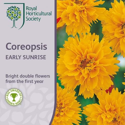 Seminte COREOPSIS grandiflora Early Sunrise -Lipscanoaie
