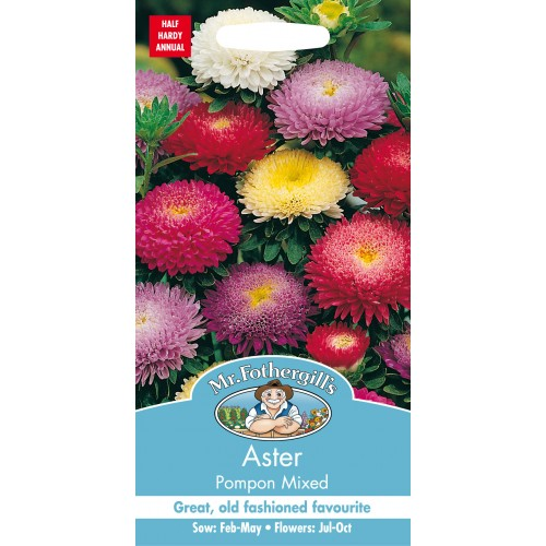 Seminte CALLISTEPHUS chinensis Pompon Mixed - Ochiul Boului