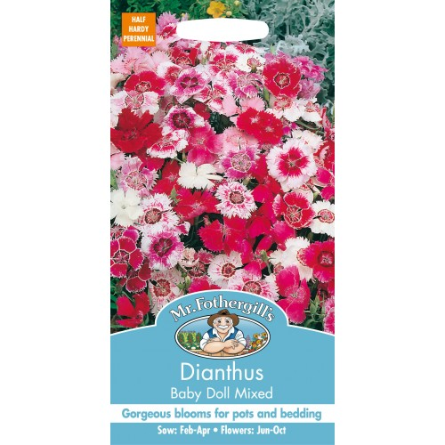 Seminte DIANTHUS chinensis Baby Doll Mixed - Garofite pitice