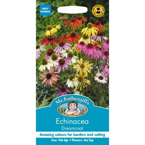 Seminte ECHINACEA purpurea Dreamcoat - Echinacea amestec