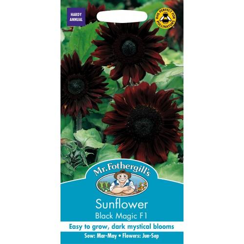 Seminte HELIANTHUS annuus-Sunflower- Black Magic F1 - Floarea Soarelui