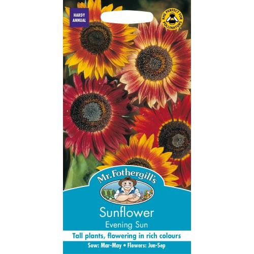 Seminte HELIANTHUS annuus Evening Sun - Floarea Soarelui