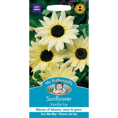 Seminte HELIANTHUS annuus-Sunflower- Vanilla Ice - Floarea Soarelui