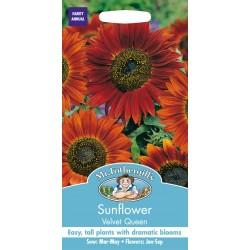 Seminte HELIANTHUS annuus-Sunflower- Velvet Queen - Floarea Soarelui