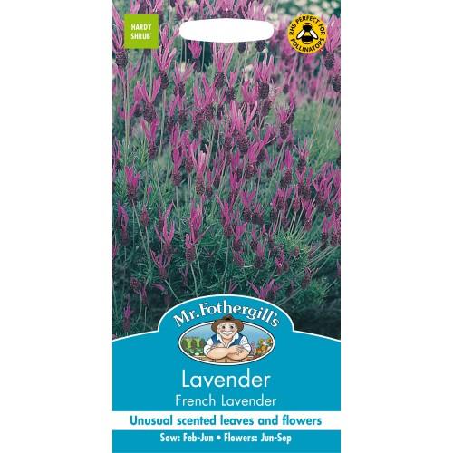 Seminte LAVANDULA stoechas French Lavender - Lavanda frantuzeasca