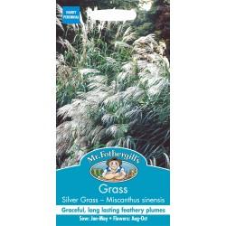 Seminte Grass - MISCANTHUS sinensis Silver Grass  - Iarba Decorativa