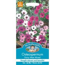Seminte OSTEOSPERMUM Daisy-Mae Mixed - Margarete africane