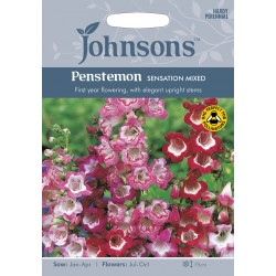 Seminte PENSTEMON hartwegii Sensation Mixed  - Degetarel