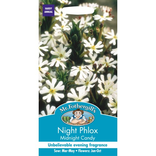 Seminte PHLOX NIGHT Midnight Candy - Brumarele de noapte parfumate