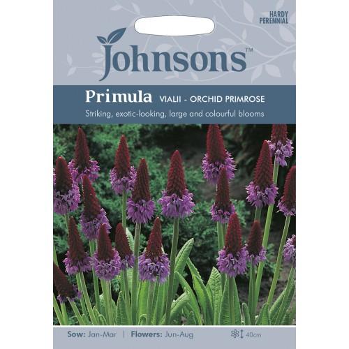 Seminte PRIMULA vialii Orchid Primrose - Ciubotica cucului