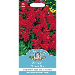 Seminte SALVIA splendens Blaze of Fire - Salvia decorativa