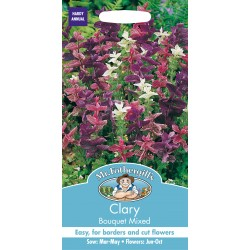 Seminte SALVIA viridis Bouquet Mixed - Salvia decorativa