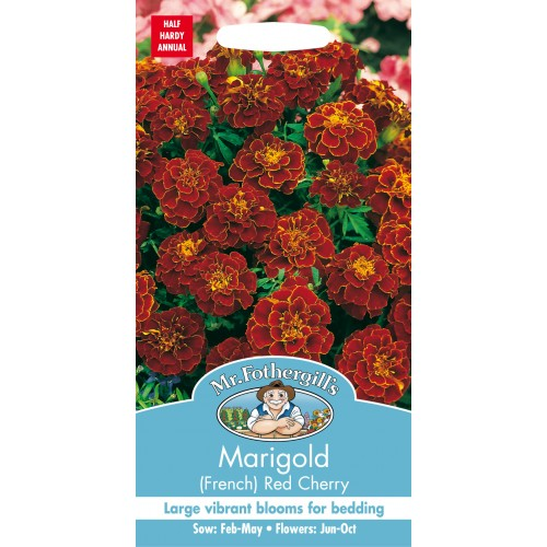Seminte TAGETES patula-French- Red Cherry - Craite pitice