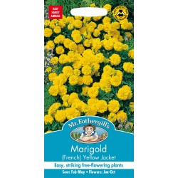 Seminte TAGETES patula-French- Yellow Jacket - Craite pitice