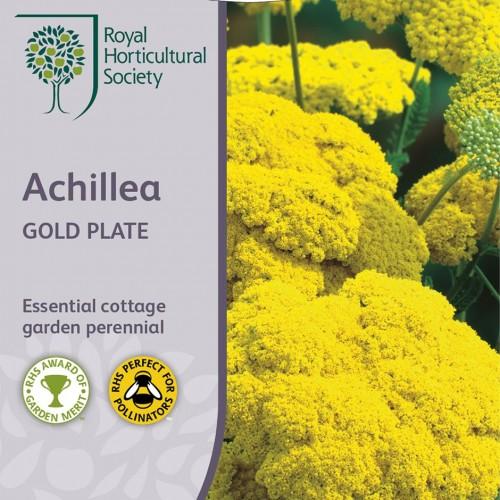Seminte ACHILLEA filipedulina Gold Plate-Coada soricelului