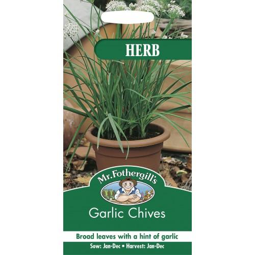 Seminte ALLIUM tuberosum Garlic Chives  - Usturoi peren de frunze