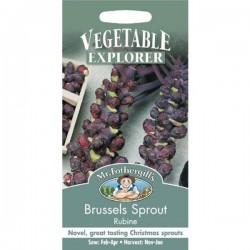 Seminte BRASSICA oleracea gemmifera-Brusseles-Rubine-Varza de Bruxelles rosie