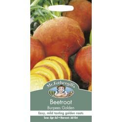 Seminte BETA vulgaris-Beetroot- Burpees Golden  - Sfecla de masa portocalie
