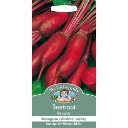 Seminte BETA vulgaris-Beetroot- Renova  - Sfecla de masa cilindrica, f gustoasa, monogerma