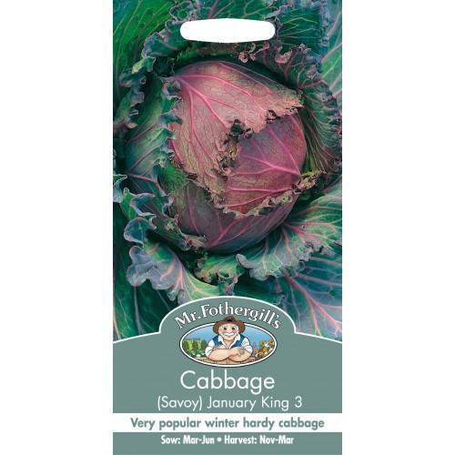 Seminte BRASSICA oleracea January King 3 - Varza tip Savoia