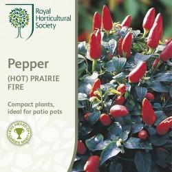 Seminte CAPSICUM annuum-Hot Pepper-Prairie Fire-Ardei iute pitic
