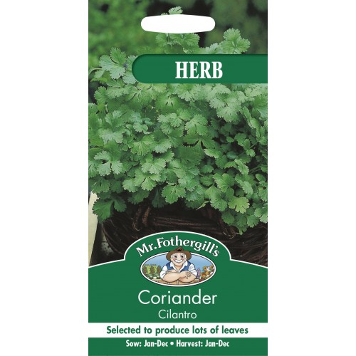 Seminte CORIANDRUM sativum Cilantro - Coriandru de frunze