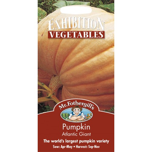 Seminte CUCURBITA-Pumpkin - pepo Atlantic Giant - Dovleac foarte mare