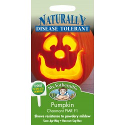 Seminte CUCURBITA pepo-Pumpkin- Charmant PMR F1 - Dovleac de placinte