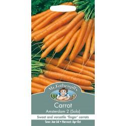 Seminte DAUCUS carota-Carrot-Amsterdam 2  - Morcov dulce, timpuriu