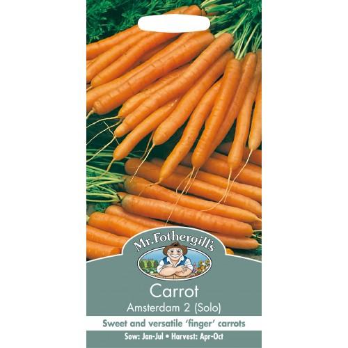 Seminte DAUCUS carota Amsterdam 2  - Morcov dulce, timpuriu
