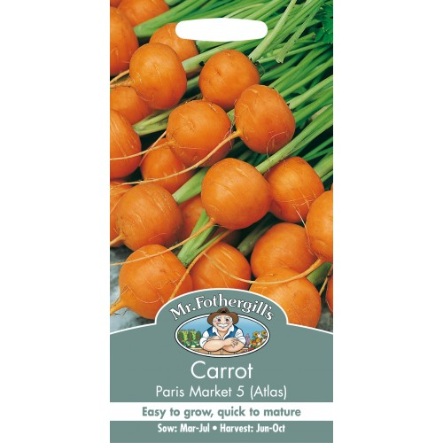 Seminte DAUCUS carota-Carrot-Atlas Paris Market 5 - Morcovi rotunzi