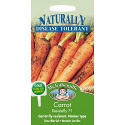 Seminte DAUCUS carota-Carrot-Resistafly F1 - Morcovi rezistenti la atacul insectelor