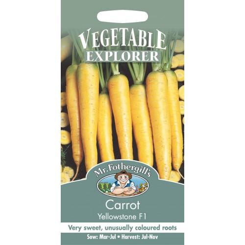 Seminte DAUCUS carota-Carrot-Yellowstone - Morcov galben, radacini viguroase, rezistent la boli