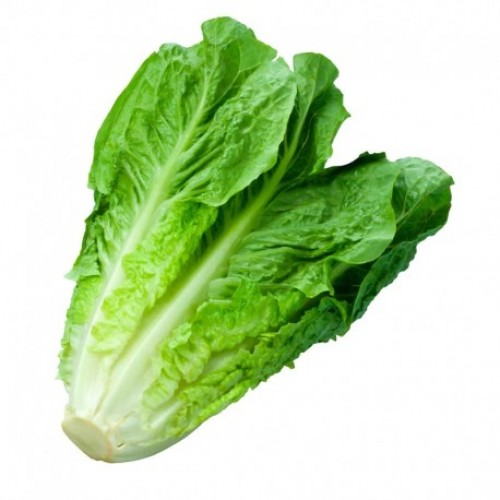 Seminte LACTUCA sativa-Lettuce-Parris Island Cos ORG-Salata tip cos